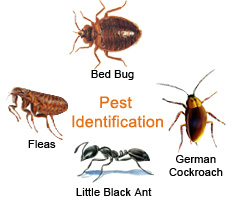 Bed Bug Pest Control Exterminator Service In Nyc And Beyond
